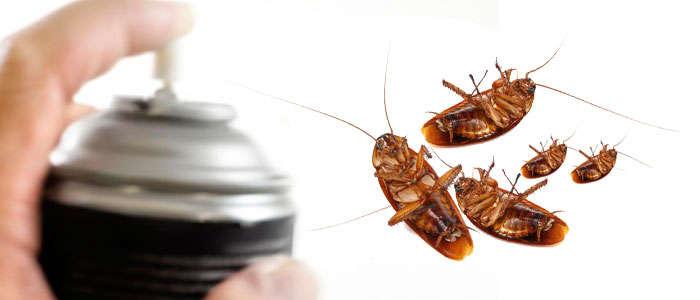Cómo eliminar y acabar con las cucarachas