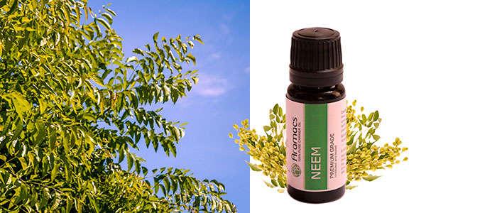 Aceite de neem como remdio contra las hormigas en las plantas