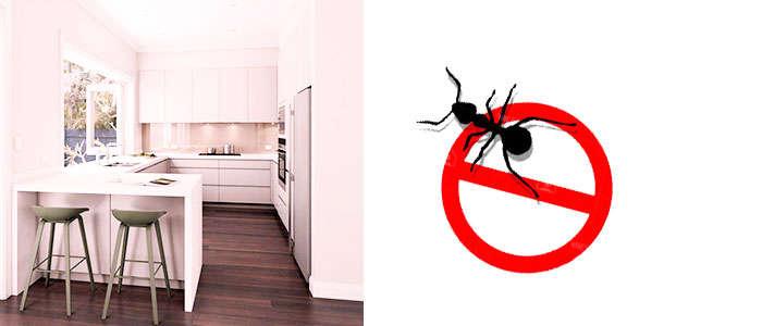 Cómo eliminar hormigas en casa y en la cocina