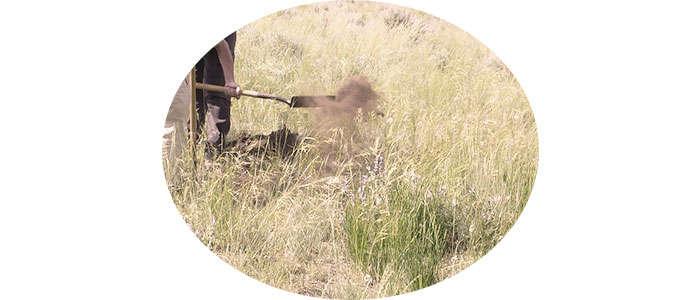Cómo eliminar un hormiguero