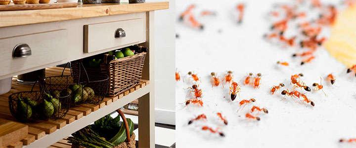 Plaga de hormigas en la cocina
