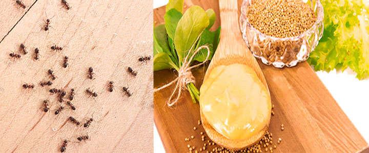 Remedios caseros para las homigas en las plantas y en el jardín