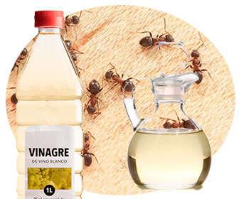 El vinagre sirve para matar hormigas